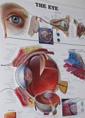 The Different Types of Glaucoma